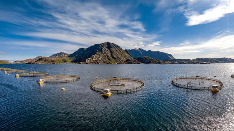 Science has not kept pace with aquaculture, study says