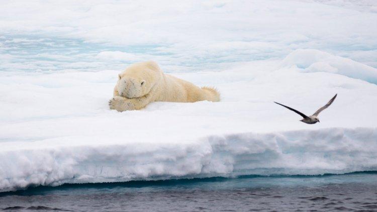 NASA satellites show how clouds respond to Arctic sea ice change